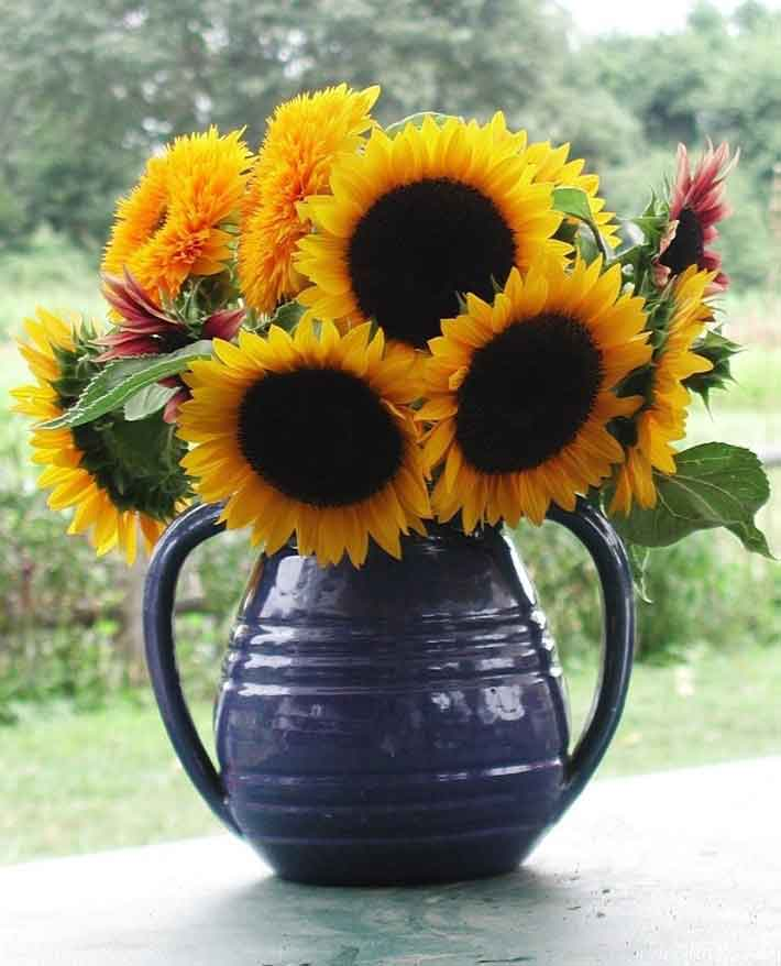 seasonal-sunflowers